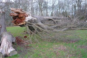 Fallen Tree Removal Services by W. H. Skinner & Sons